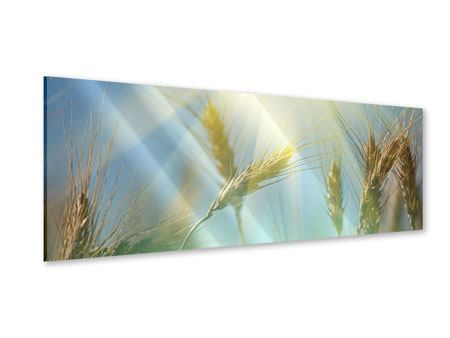 Panoramic Acrylic Print King Of Cereals