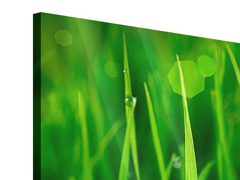 3 Piece Acrylic Print Grass With Morning Dew
