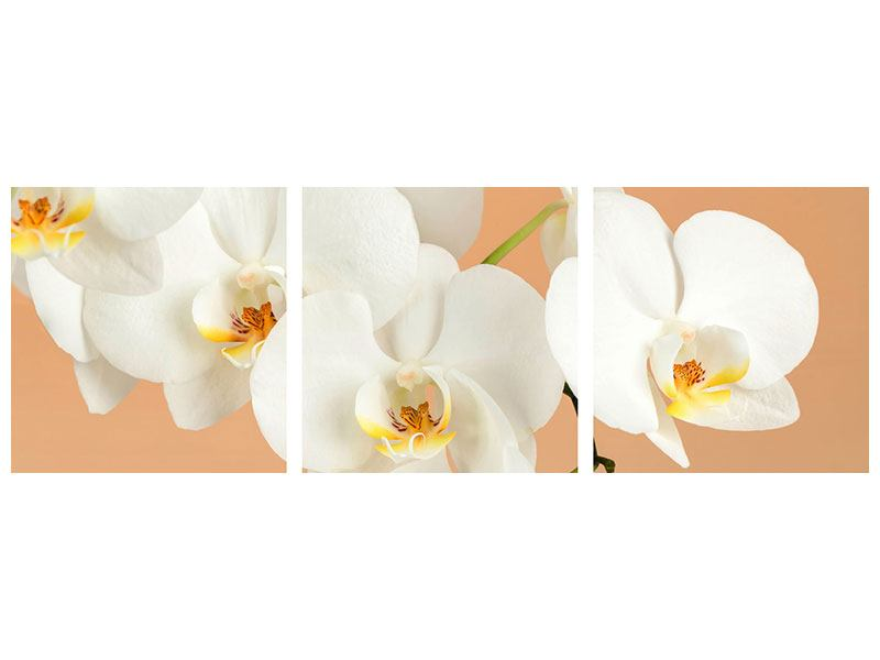 Panoramic 3 Piece Acrylic Print White Orchid Flowers
