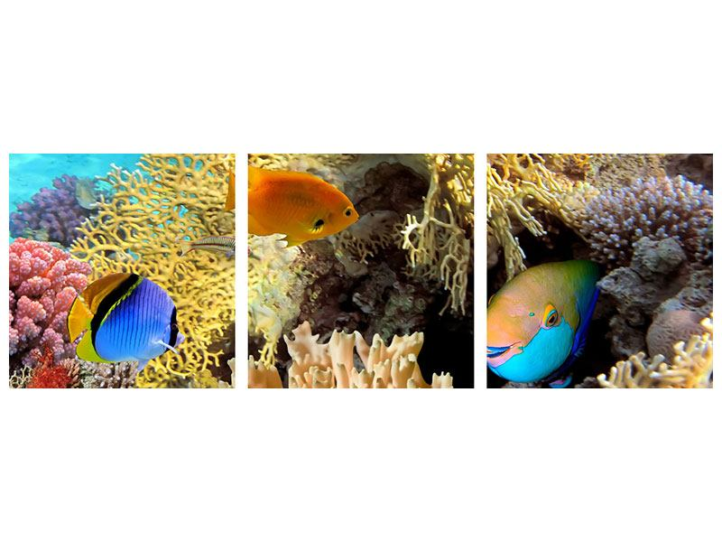 Panoramic 3 Piece Acrylic Print Fish Wealth