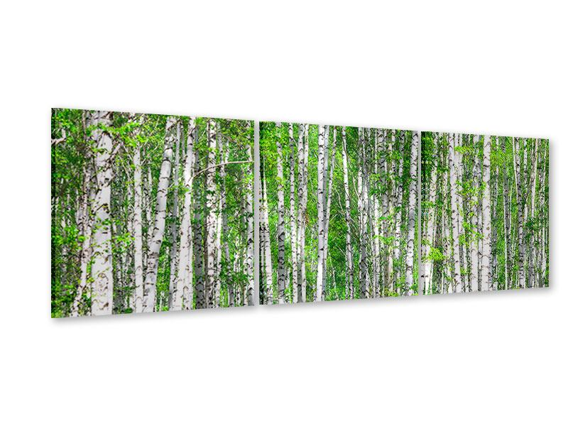 Panoramic 3 Piece Acrylic Print The Birch Forest