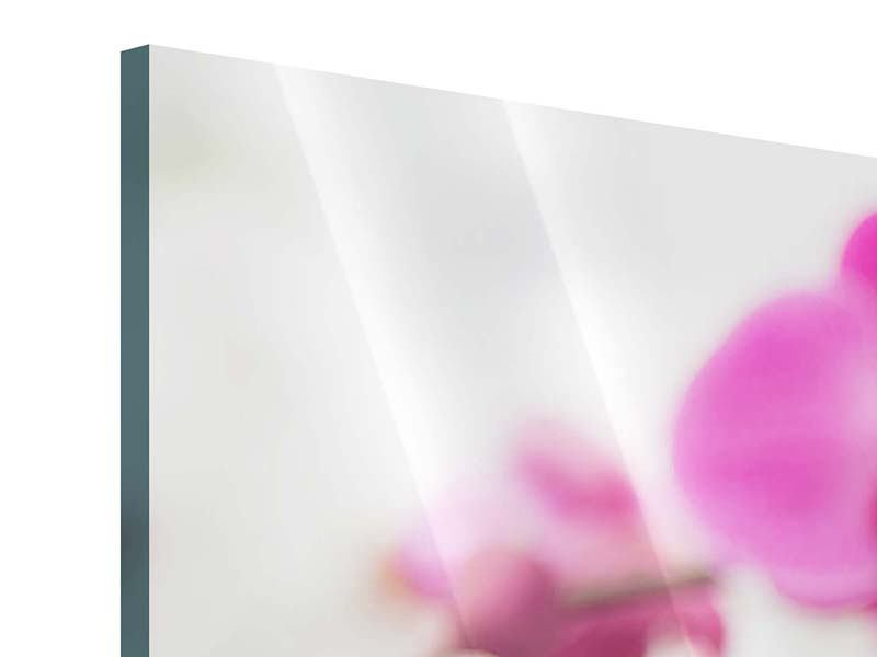 Panoramic 3 Piece Acrylic Print The Symbol Of Orchid