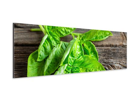 Panoramic Aluminium Print Basil Leaves