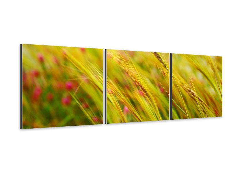 Panoramic 3 Piece Aluminium Print The Wheat Field