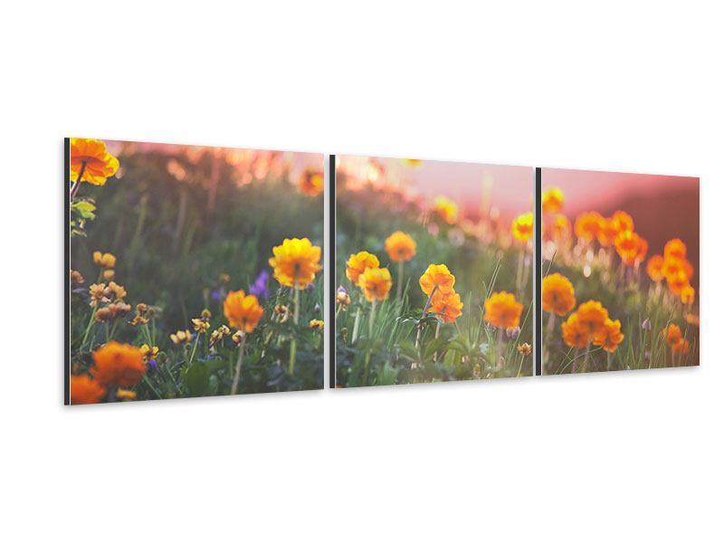 Panoramic 3 Piece Aluminium Print The mountain Meadow