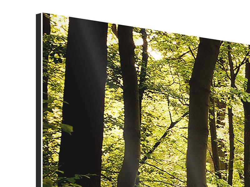 5 Piece Aluminium Print Sunrise In The Forest