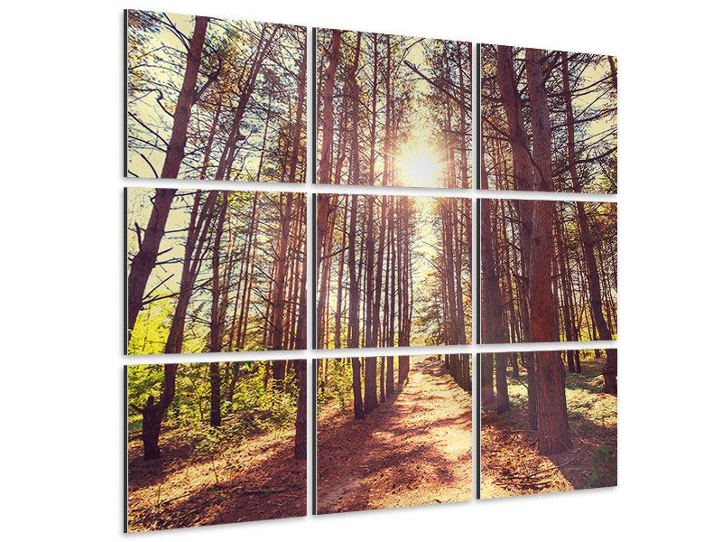 9 Piece Aluminium Print Light At The End Of The Forest Path