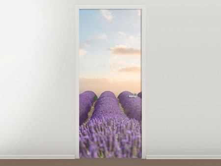 Door Mural The Blooming Lavender Field