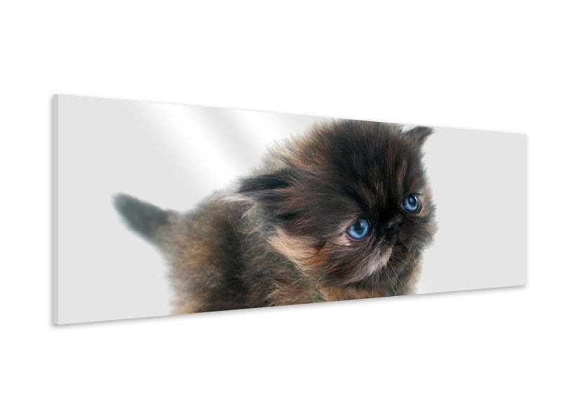 Tableau Forex Panoramique Chaton persan