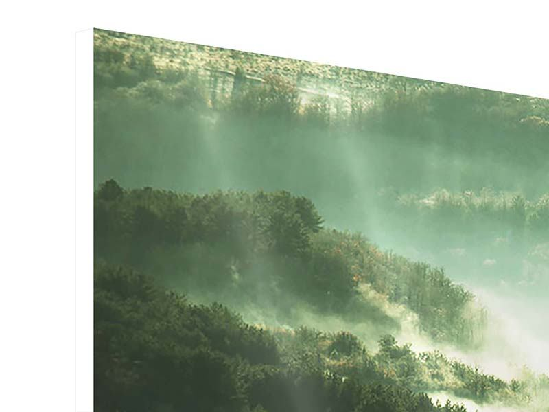 Panoramic Forex Print Over The Woods