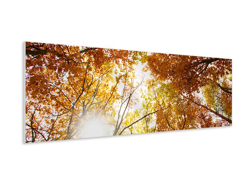 Panoramic Forex Print Enlightened Autumn Trees