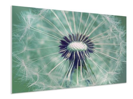 Forex Print Close Up Dandelion