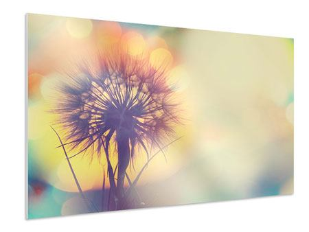 Forex Print The Dandelion In The Light