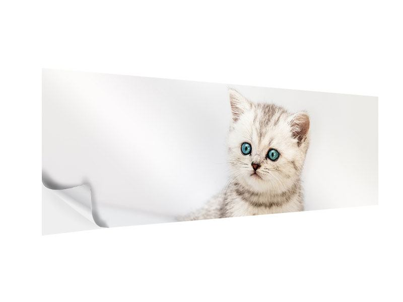 Panoramic Self-Adhesive Poster Little Kitten