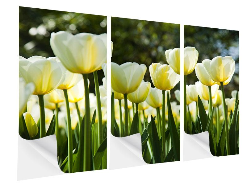 3 Piece Self-Adhesive Poster Tulips At Sunset