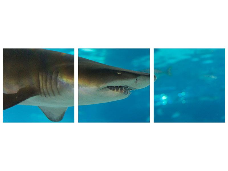 Panoramic 3 Piece Self-Adhesive Poster The Shark