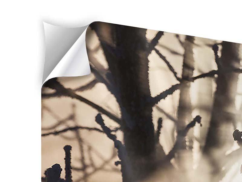 Modern 4 Piece Self-Adhesive Poster Branches In Fog Light
