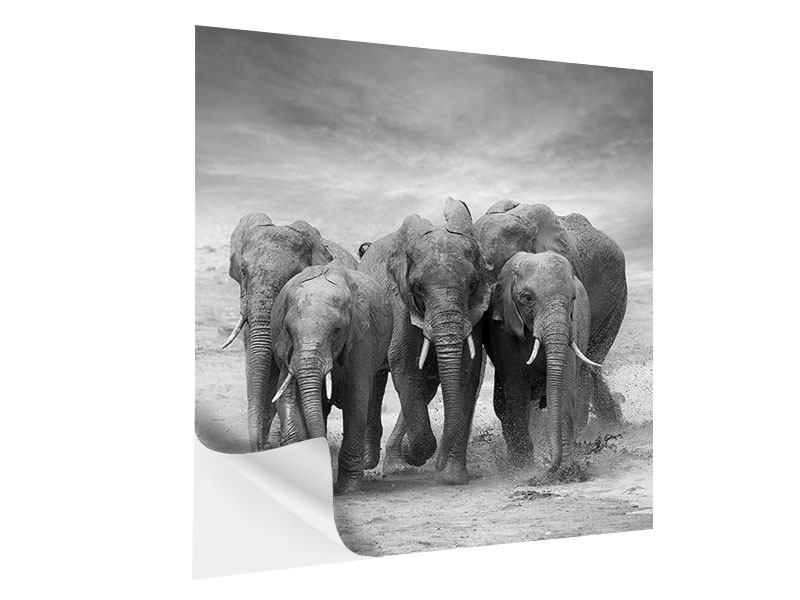 Self-Adhesive Poster The Elephants
