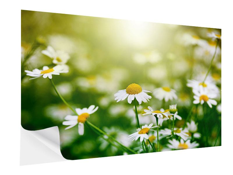Self-Adhesive Poster The Daisy