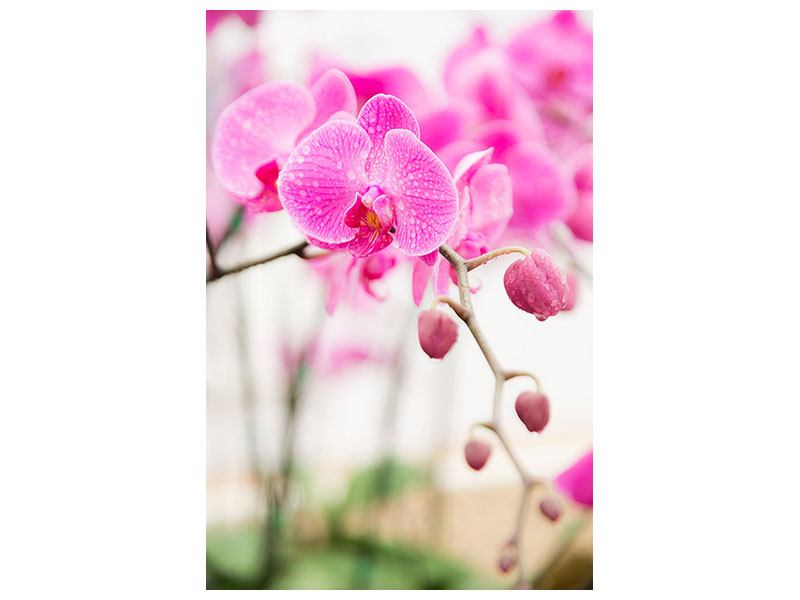 Self-Adhesive Poster Striped Orchid Flowers In Pink