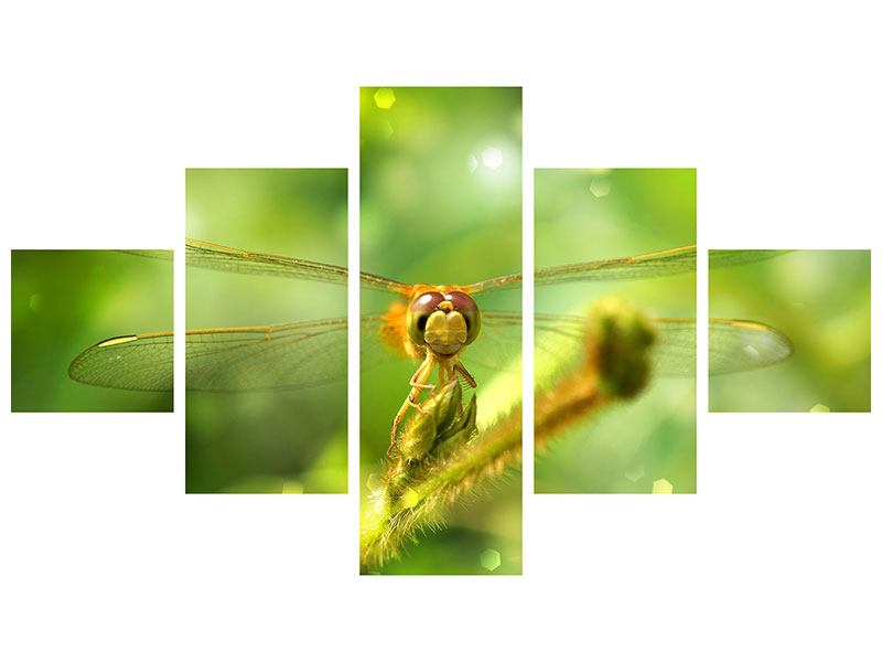5 Piece Self-Adhesive Poster XXL Dragonfly