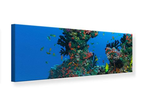 Panoramic Canvas Print The World Of Fish