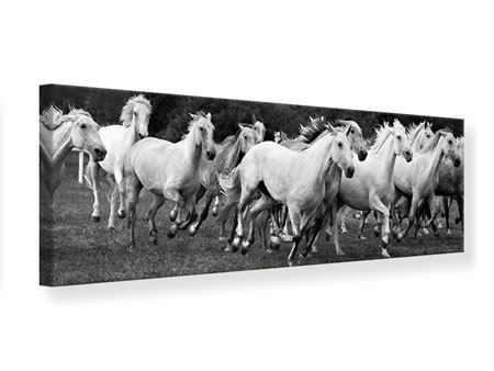 Panoramic Canvas Print The Mustang Herd