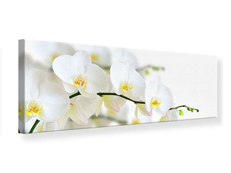 Panoramic Canvas Print White Orchids