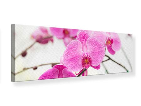 Panoramic Canvas Print The Symbol Of Orchid