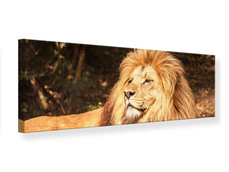 Panoramic Canvas Print Lion