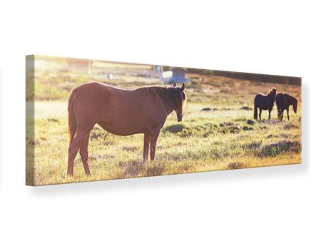 Panoramic Canvas Print Wild Horses