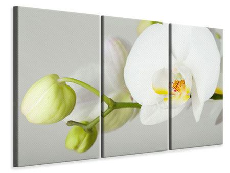 3 Piece Canvas Print Giant Orchid
