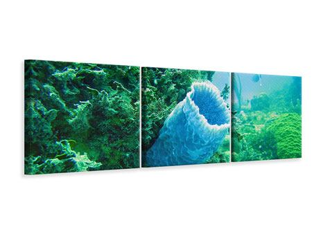 Panoramic 3 Piece Canvas Print Coral