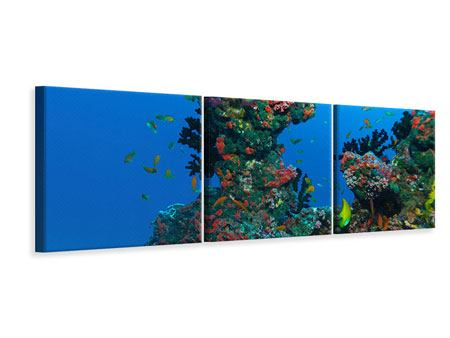 Panoramic 3 Piece Canvas Print The World Of Fish