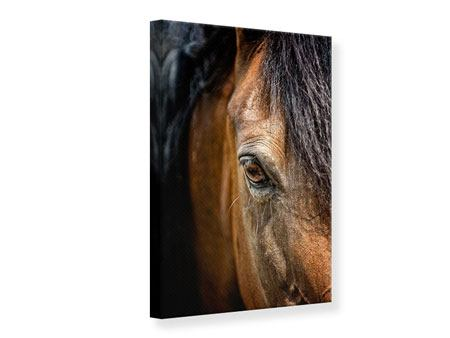 Canvas Print Thoroughbred Stallion