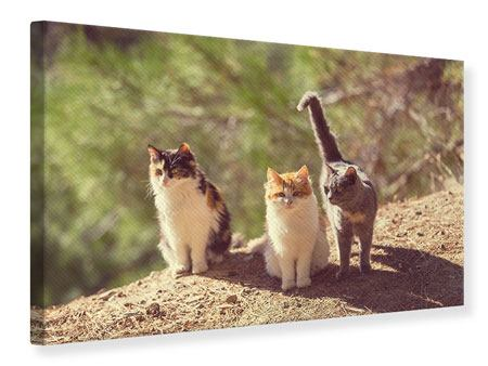 Canvas Print Cats In The Garden