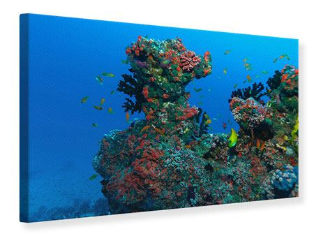 Canvas Print The World Of Fish