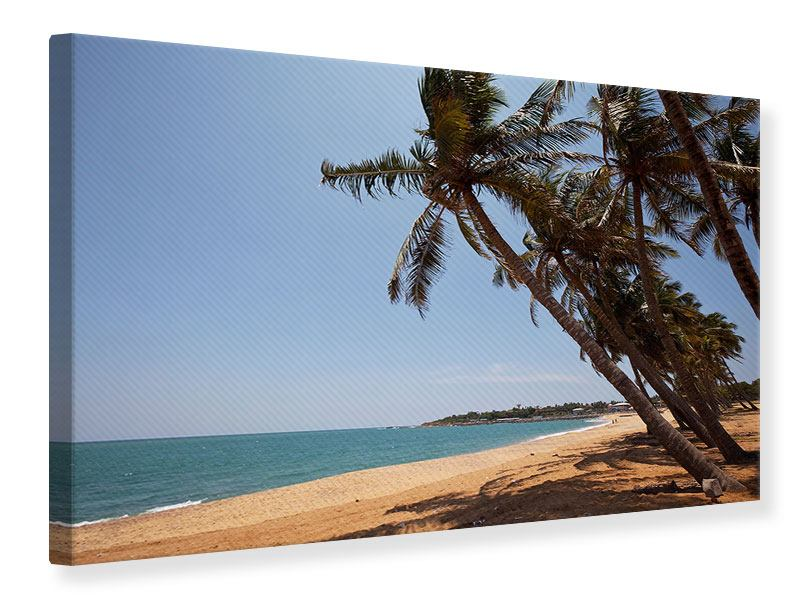 Canvas Print Palm Leaves