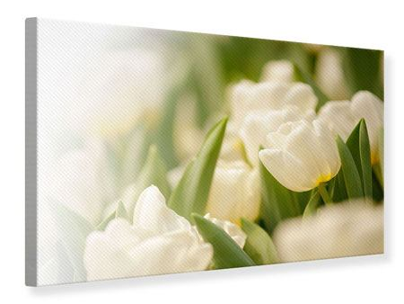 Canvas Print Tulips Perspective
