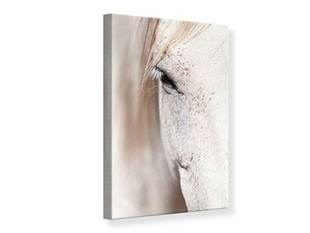 Canvas Print Whole Blood White Horses