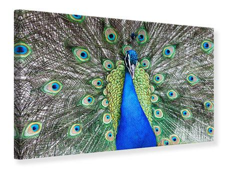 Impresion en Canvas Pavo real
