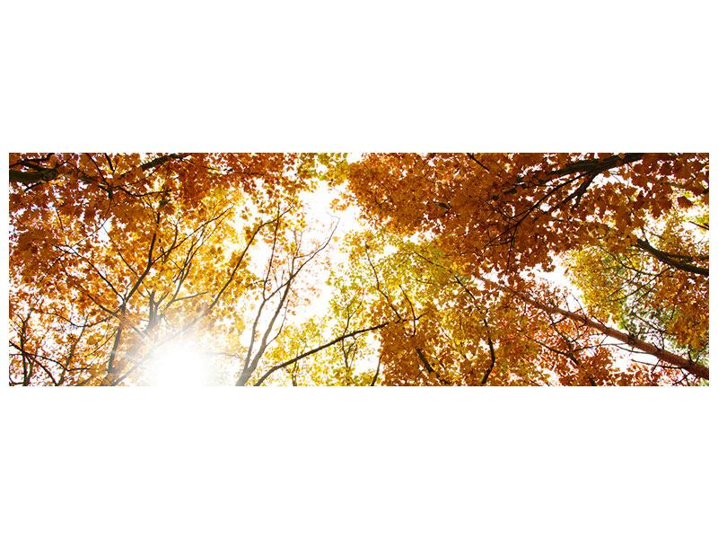 Panoramic Metallic Print Enlightened Autumn Trees