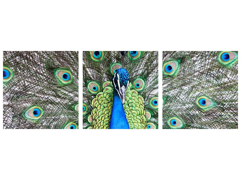 Panoramic 3 Piece Metallic Print Blue Peacock