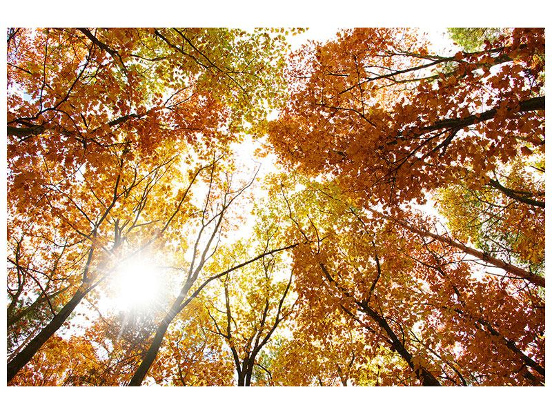 Metallic Print Enlightened Autumn Trees