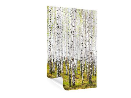 Poster The Birch Forest In The Spring