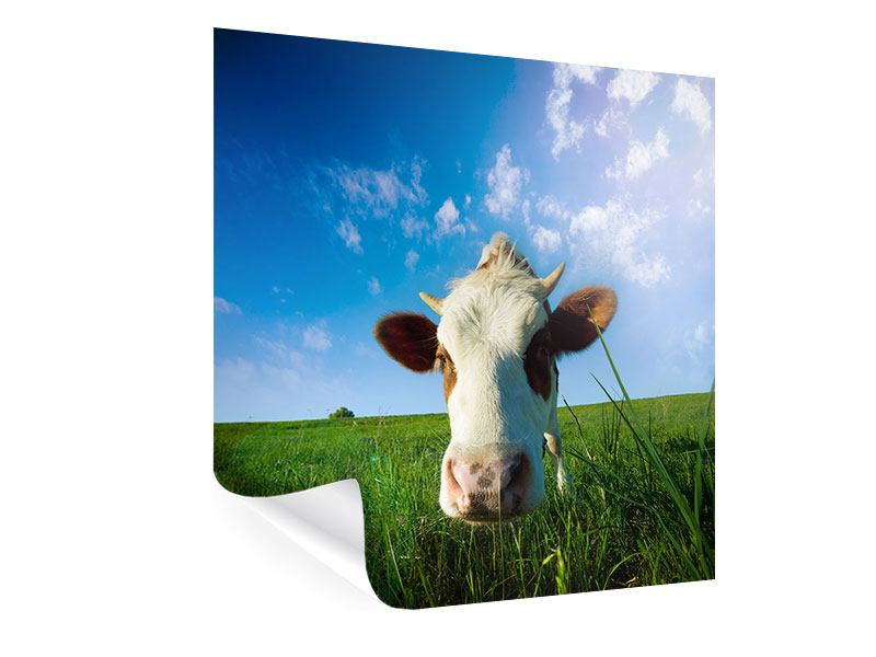 Poster The Cow