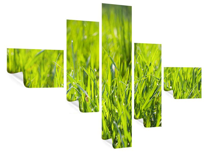 Modern 5 Piece Poster Bright Grass In Morning Dew