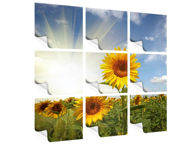 9 Piece Poster Sunflower In Sunlight